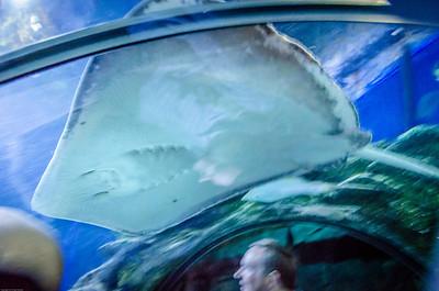 London Sealife Aquarium-7