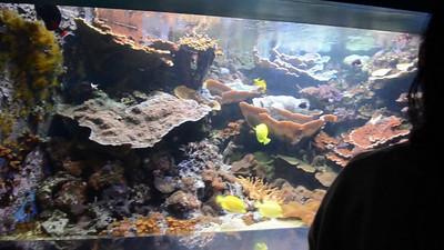 London Sealife Aquarium-21
