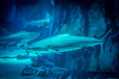 London Sealife Aquarium-8