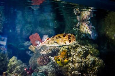 London Sealife Aquarium-19