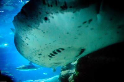 London Sealife Aquarium-6