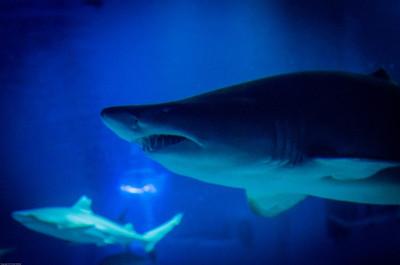 London Sealife Aquarium-16