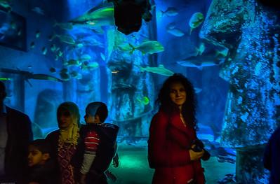 London Sealife Aquarium-11