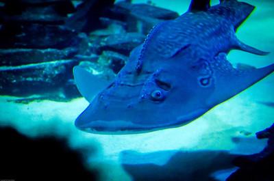 London Sealife Aquarium-22
