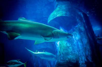 London Sealife Aquarium-10