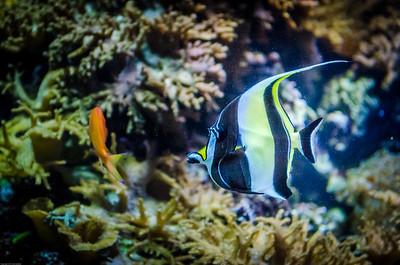 London Sealife Aquarium-20