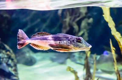 London Sealife Aquarium-1