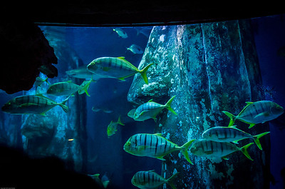 London Sealife Aquarium-14