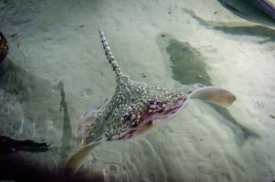 London Sealife Aquarium-2