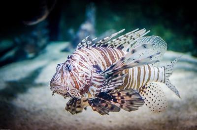 London Sealife Aquarium-17