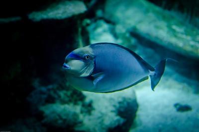 London Sealife Aquarium-4