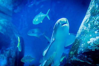 London Sealife Aquarium-9