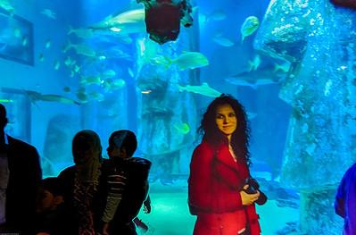 London Sealife Aquarium-12