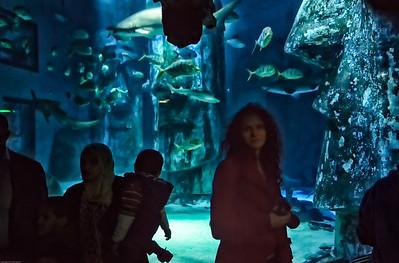 London Sealife Aquarium-13