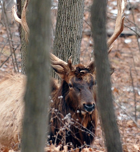 Lone Elk Park Missouri