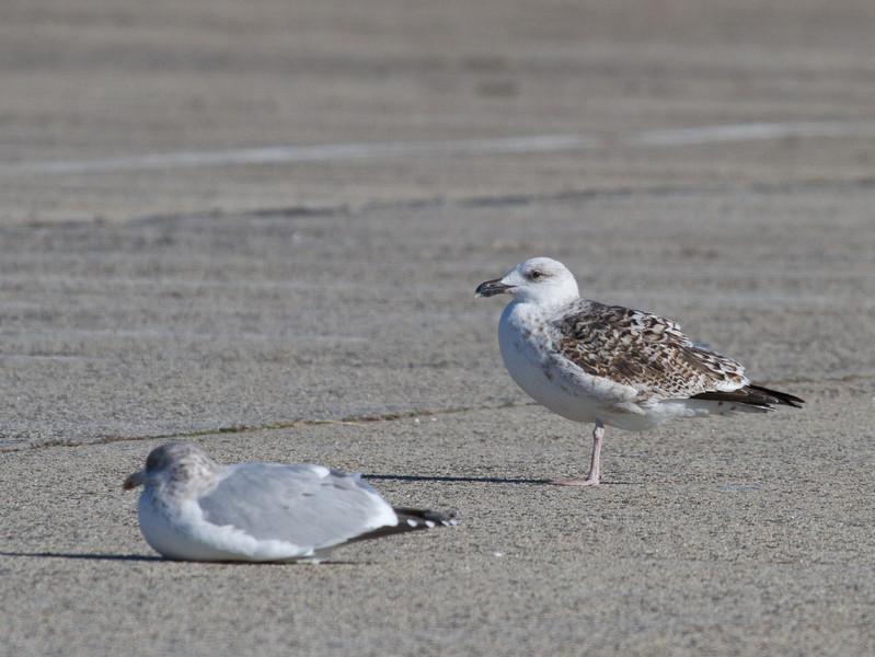 Jones Beach State Park (West End), 12/26/11