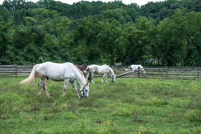 Longstreet Farm, Howell NJ