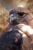 Zoo Birds #5