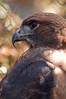 Zoo Birds #3