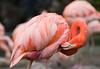 Zoo Birds #1