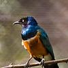 Zoo Birds #9