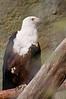 Zoo Birds #12