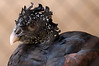 Zoo Birds #13