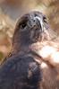 Zoo Birds #4