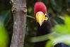 Zoo Birds #10