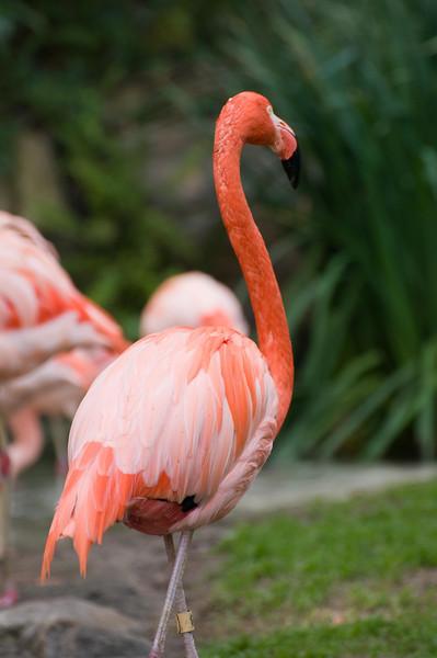 Zoo Birds #8