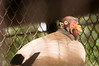 Zoo Birds #15