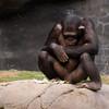 Zoo Primates #7