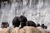 Zoo Primates #11