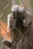 Zoo Primates #4