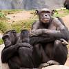 Zoo Primates #6