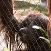 Zoo Primates #3