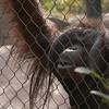 Zoo Primates #2