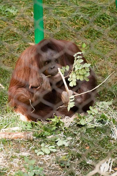 Zoo Primates #1