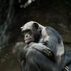 Zoo Primates #12