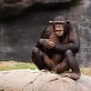 Zoo Primates #8