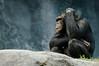 Zoo Primates #13