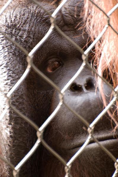 Zoo Primates #5