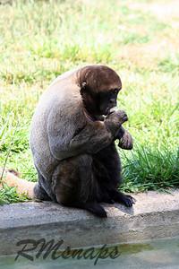 zoo_20070616_0373