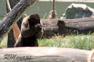 zoo_20070616_0362