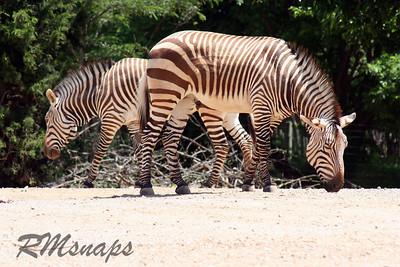 zoo_20070616_0356