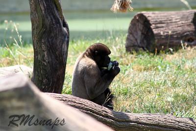 zoo_20070616_0364