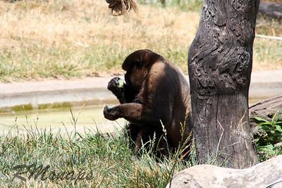 zoo_20070616_0367