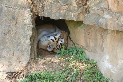 zoo_20070616_0385