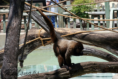 zoo_20070616_0370