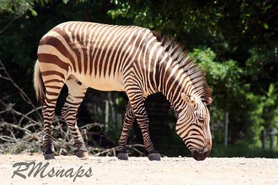zoo_20070616_0357
